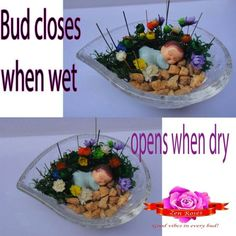 Frozen chrysanthemums with sleeping baby