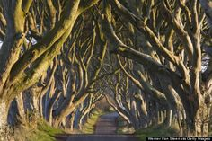 Spectacularly eery, Northern Ireland's Dark Hedges create a haunting escape and has been featured on Game of Thrones #travel #offthebeatenpath #spooky