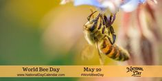 Happy World Bee Day ! I first mentioned the holiday in Happy World Honey Bee Day There is also a World Bee Day recognized by the . Harvesting Honey, Million Flowers, First Aid Treatment, National Day Calendar, National Days, World Days, Charity Organizations, Bee Friendly, International Day