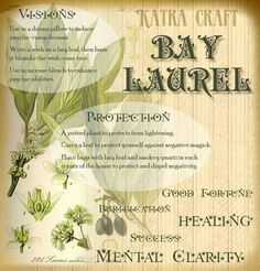 Bay leaves are a great herb for spell crafting. They are safe to burn or cook with & are good for a multitude of workings. Magic Herbs, Herbal Magic, Plant Magic, Green Witchcraft, Wicca Witchcraft, Magick Spells, Gypsy Spells, Wiccan Witch, Witch Herbs