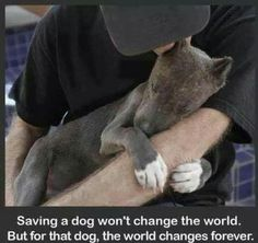 Save a dog won't change the world. But for the dog the world change fore dogs. I Love Dogs, Puppy Love, Cute Dogs, Animals And Pets, Funny Animals, Cute Animals, Animal Quotes, Dog Quotes, Sweet Dogs