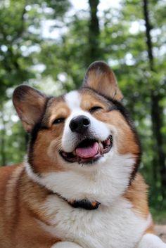 Cooper Corgi SMILE