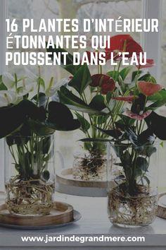 Pot Jardin, Decoration Plante, Planted Aquarium, Plantar, Hydroponics, Horticulture, Pretty Flowers, Potted Plants, Vases