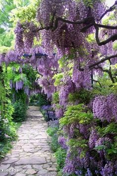 love anything purple!