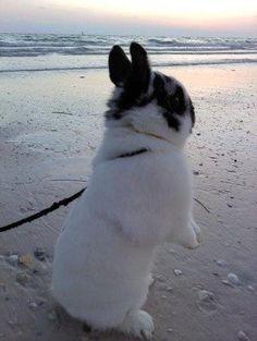https://www.facebook.com/photo.php  Bunny Bunz    ?fbid=10150737484852319=p.10150737484852319=1