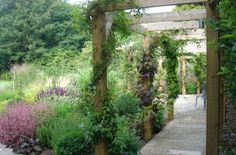Pergola's are the perfect climbing frame for many climbers such as Jasmine, Roses and Grape Vines. They will cover rapidly, this is approximately one years growth.