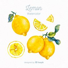 Discover thousands of copyright-free vectors. Graphic resources for personal and commercial use. Thousands of new files uploaded daily. Lemon Watercolor, Watercolor Fruit, Watercolor Sketch, Watercolor Design, Watercolor Illustration, Watercolor Paintings, Watercolors, Adobe Illustrator, Lemon Drawing