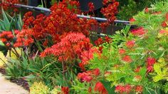 Share your vivid colors | Two landscape designers use some of the same great ideas, yet each garden ends up with its own distinct look