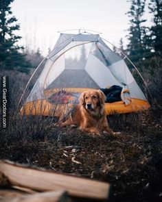 best camping partner :3 <3 #GearDoctors #Camping #photo #nature #travel #camp #fire #Forest #green #outdoor #hiking #survival #hike #HikingTrails #adventure #mountains #photography #dog #hikingadventures #adventuretime -FOLLOW US @geardoctors FOR MORE!-