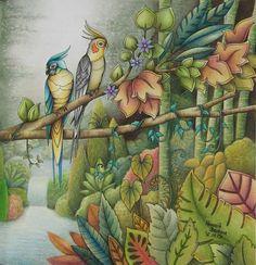 Parrots Magical Jungle