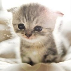 I've just been bowled over by cuteness !!