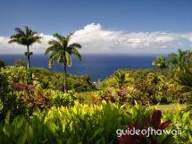 the road to hana-I've been to wonderful Maui, but didn't make it to Hana; next trip!