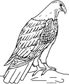 red winged blackbird coloring pages | red-winged blackbird colouring pages | School | Red wing ...