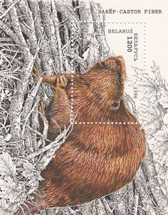 Beaver stamp #illustrator #design