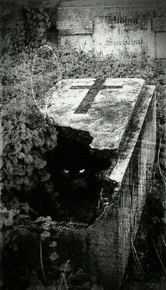 Cemeteries Ghosts Graveyards Spirits: Broken coffin and black cat. Cemetery Headstones, Old Cemeteries, Cemetery Art, Graveyards, Dark Side, Dark Art, Scary, Horror, Photos