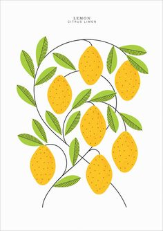 Lemons | Sarah Abbot - The colors in this print would be perfect to tie the dining room and kitchen together when I get my color scheme right as planned