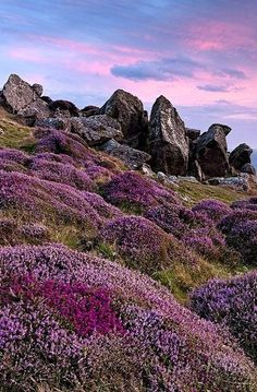 Heather in the Highlands, South Wales Oh The Places You'll Go, Places To Visit, Scotland Travel, Skye Scotland, Ireland Travel, British Isles, Belle Photo, Beautiful Landscapes, Wonders Of The World