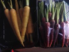 Yellow, orange and red carrots now available from The Cape Honey Bee.