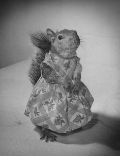 Tommy Tucker: A Squirrel's Guide to Fashion | Photos - LIFE