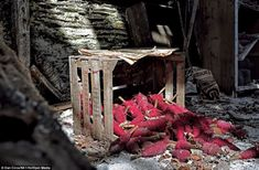 Disused since 1980, the mill has been untouched and boxes of yarn lay abandoned on the floor of the buildiing located in Tal-y-bont, near Ab...