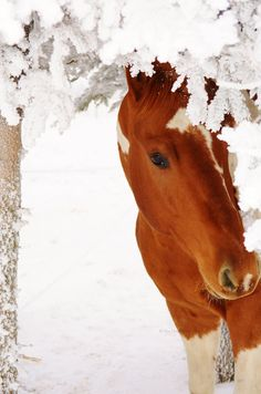 Paint horse in the snow.