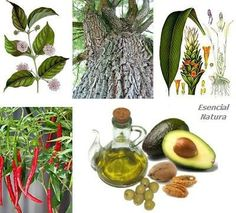 Seis alternativas naturales a ibuprofeno