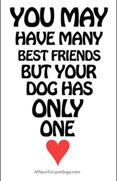 You may have many best friends but you dog has only one.