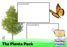 Discover the wonderful world of plants with our fantastic collection of teaching, activity and classroom display resources. Includes a child-friendly guide to plant growth, pollination, photosynthesis, classification, adaptation and much more! Science Curriculum, Science Resources, Activities, Plant Growth, Classroom Displays, Photosynthesis, Wonders Of The World, Teaching, Plants