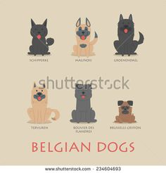 Set of belgian dogs , eps10 vector format - stock vector
