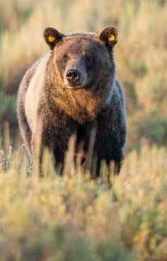 Paul Martin's Jackson Hole Wildlife Photography Safaris, Wyoming – Yellowstone, Grand Teton National Parks Scenic and Wildlife Tours