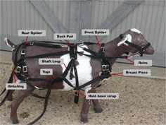 goat harness images | Diagram of a typical goat harness.