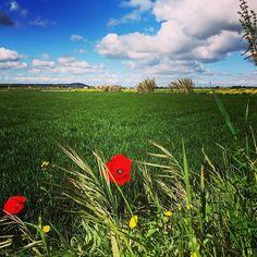 #Navarra en primavera... Cerca de Carcastillo, en la Ribera de Navarra (By @majobe9 - #Instagram) --> http://www.turismo.navarra.es/esp/propuestas/descubra-reyno/desarrollo/ribera.htm