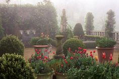 English designers Isabel and Julian Bannerman's gardens ~ the misty fog just adds to its beauty.
