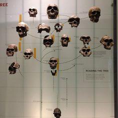 Spitzer Hall of Human Origins via @dandybandit