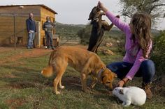 The idea behind our agrotourism farm is to create a sustainable farming area in southern Greece with the use of homeodynamic agriculture, which is as an alternative organic method of farming, similar Sustainable Farming, Organic Farming, Dog Friendly Hotels, Eco Friendly, Greece Tourism, Greece Hotels, Dog Hotel, Stay The Night, Dog Friends