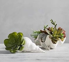 A statement piece on a console or as a centerpiece on a table, the Silver Clam Shell brings sheen and a bit of glamour to a room. Faux Succulents, Faux Plants, Succulents Garden, Plant In Glass, Clear Glass Vases, Areca Palm Plant, Succulent Wall Art, Mint Plants, Indoor Greenhouse