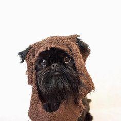 to the day I didn't know if I had a dog or an ewok. by digbyvanwinkle Fitness Gadgets, Tech Hacks, Dog Halloween Costumes, Ewok, Kittens, Pets, Trust, Animals, Instagram
