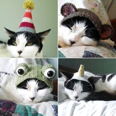 cat hats @Rosie HW HW Sanford if you make some for the dogs you can't forget about your cat. :)