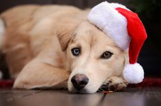 Christmas with Koda by Night--Raven.deviantart.com on @deviantART