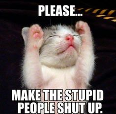Make the stupid people stop!  http://melanysguydlines.com  #humor #blogger #funny #quotes #memes #cats
