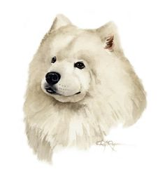 SAMOYED Dog Watercolor Painting ART Print Signed by k9artgallery, $12.50