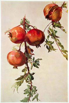 1917 Photolithograph ART Nouveau Pomegranates Roberto Franzoni Melagrane.