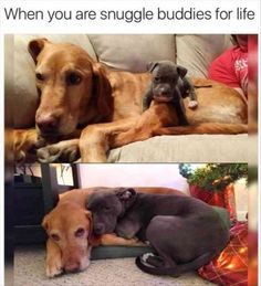 Funny Animal Pictures & Memes