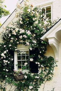 Climbing roses add so much beauty. They become part of the 'architecture.'