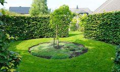 Det runda rummet är omgärdat av en bokhäck och i mitten växer ett hängmullbärsträd som har vackert bladverk och goda bär. Om några år når grenverket marken och ska då bli en koja. Smarta växtval är en av de bästa vägarna till en lättskött trädgård enligt Camilla. Att välja växter som inte sprider sig eller frösår sig ymnigt underlättar, liksom att plantera tätt. Har man mycket barmark i rabatterna är det lättare för ogräset att etablera sig.