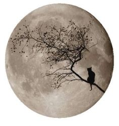 Big moon behind kitty and tree