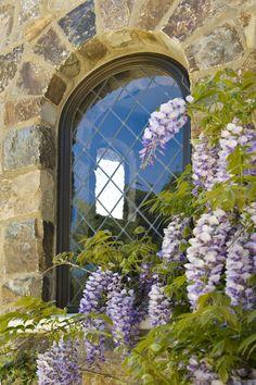 Wisteria + stone + a leaded glass window :)