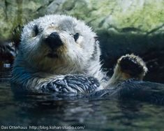 Otter is a little surprised to see you - June 13, 2012