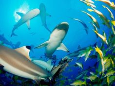 What Would Happen If Sharks Disappeared?