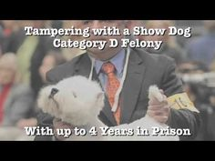 Can I get arrested for mistreating show dogs in Nevada? - YouTube